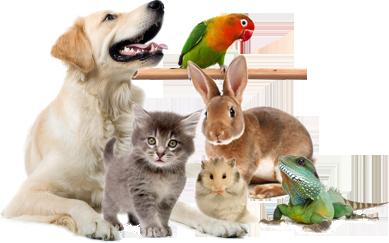доска объявлений о продаже животных в украине