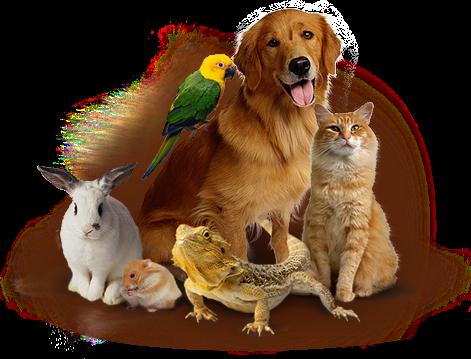 Доска объявлений о продаже животных